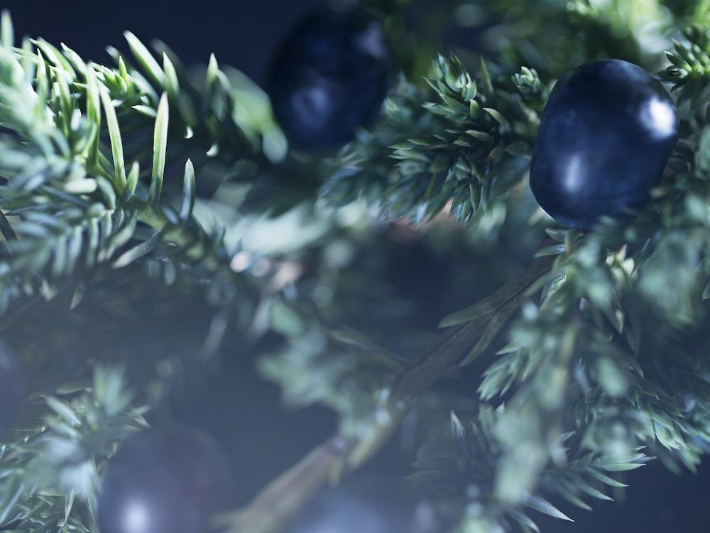 Brit Rhythm - Scent Notes - Juniper berries