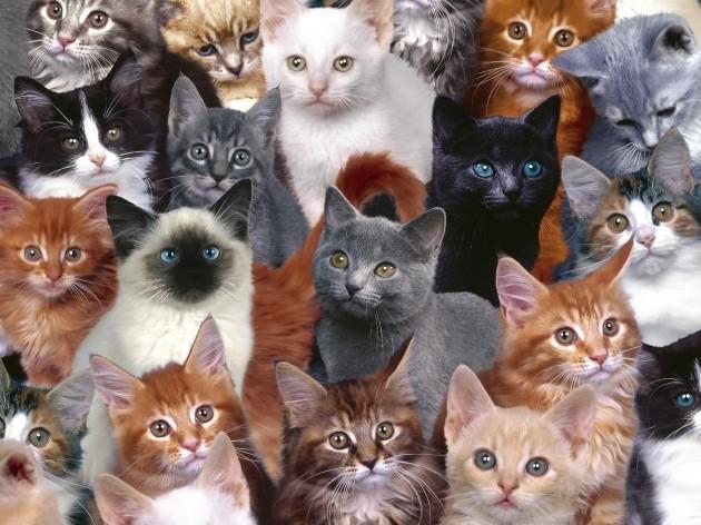 lots-of-kitties-desktop