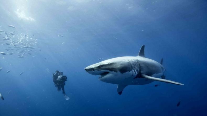 2013-06-25-great_white_shark-e1372215212272