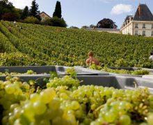 Moet-&-Chandon-Vineyards