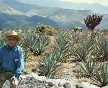 mezcal union in paxaca