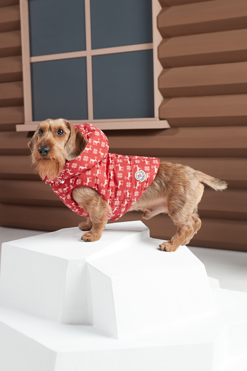 Moncler dogs