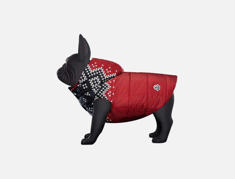 Moncler dog suit